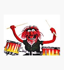 Animal Drummer Photographic Print