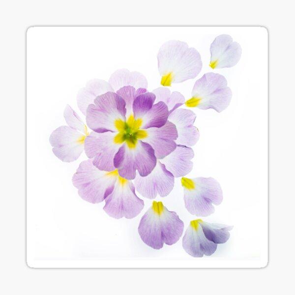Primrose Deconstruction 2 Sticker