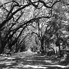 Magnolia St. by Caren