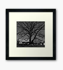 Dull Tree Framed Print