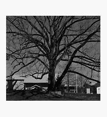 Dull Tree Photographic Print