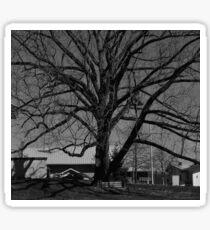 Dull Tree Sticker