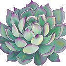 Succulent plant by redqueenself