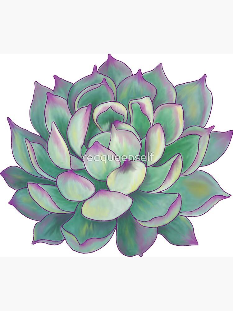 Planta suculenta de redqueenself