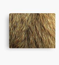 Dog fur Canvas Print