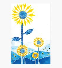 Sunflower Fields Photographic Print