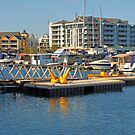 Dolphin Quay (7) by kalaryder