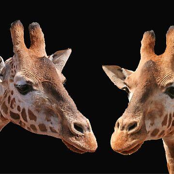 A Pair Of Giraffes by JennyB