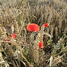 Poppies by Jackie Wilson