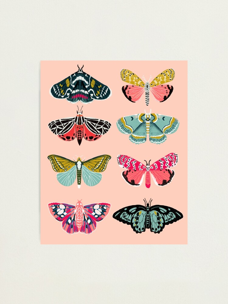 Alternate view of Lepidoptery No. 1 by Andrea Lauren  Photographic Print