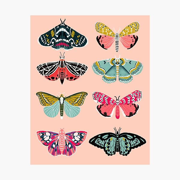 Lepidoptery No. 1 par Andrea Lauren Impression photo