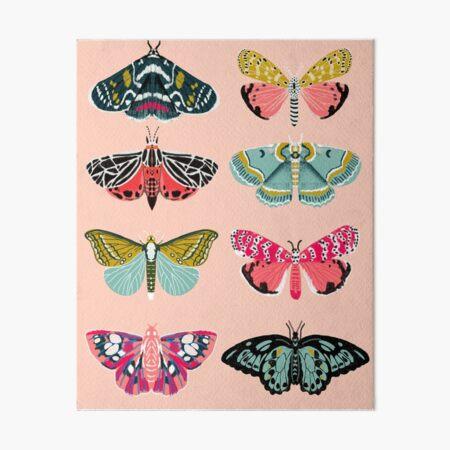 Lepidoptery No. 1 by Andrea Lauren  Art Board Print