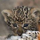 Infant leopard cub! by Anthony Goldman