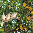 Mom's doves  by MarthaBurns