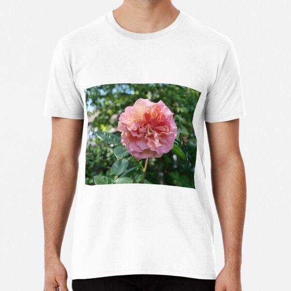 Fragrant Rachel Hybrid Tea Rose Premium T-Shirt