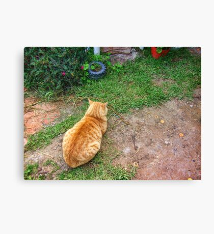 When your cat is angry with you. Canvas Print
