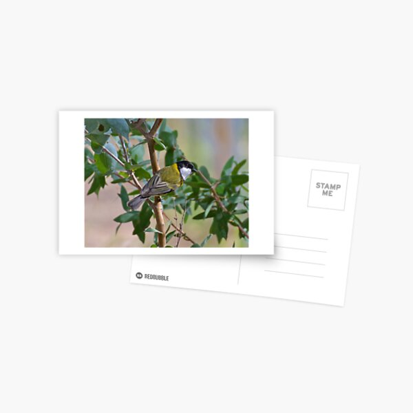 WHISTLER ~ Golden Whistler BMDJJPXL by David Irwin ~ WO Postcard