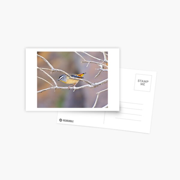 PARDALOTE ~ Spotted Pardalote cEour29s by David Irwin ~ WO Postcard
