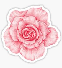 lovely rose Sticker