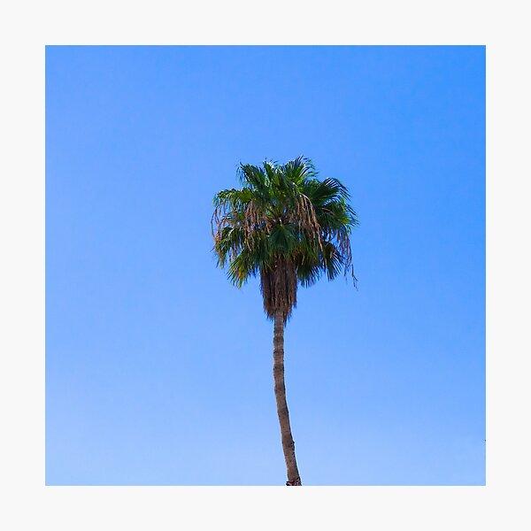 Palm Springs Palm Photographic Print