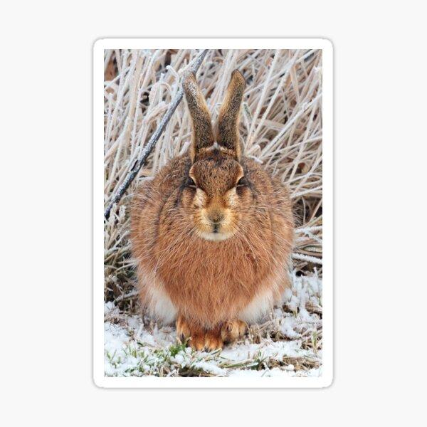 Brown Hare Sticker