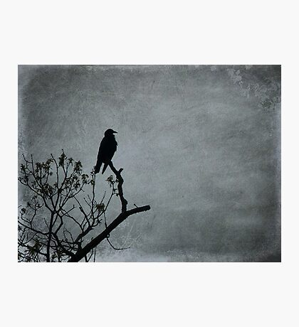 Majestic Crow Photographic Print