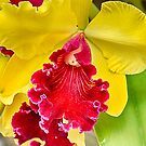 red Orchid with yellow petals... by Wieslaw Jan Syposz