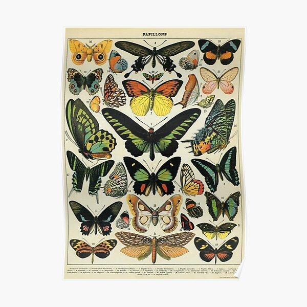 Vintage Butterflies - Darkacademia Poster