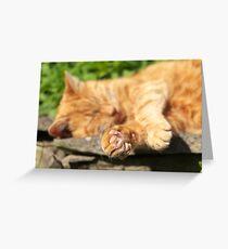 Ginger Cat Sleeping in Garden Greeting Card