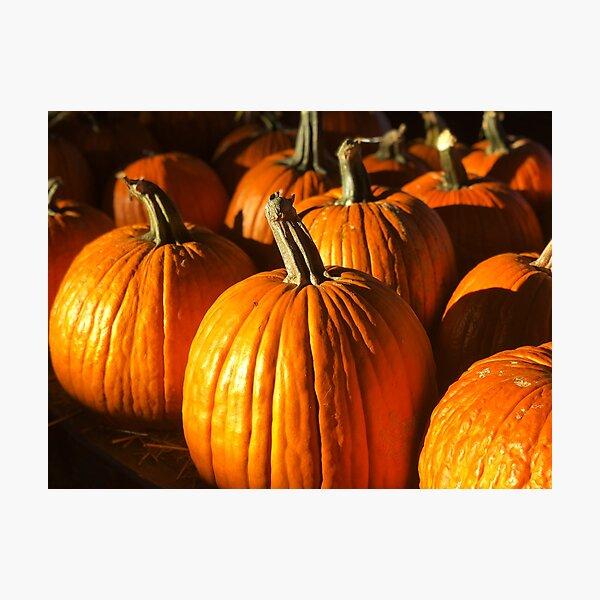 Pumpkins! Photographic Print