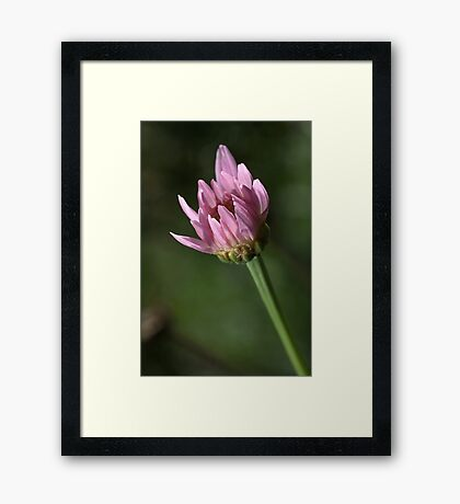 Warming in the SUN Framed Print