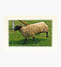 """""""With All New, 'Totallysheep Denture Gel', I Can Smile Again!""""... prints and products Photographic Print"""