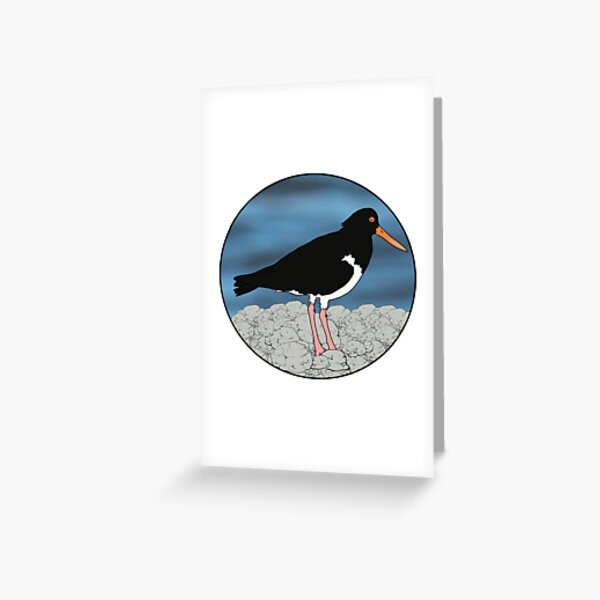 Sooty Oystercatcher Greeting Card