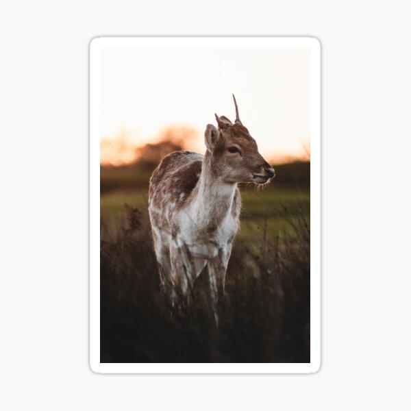 Knole Park - Deer at Sunrise Sticker