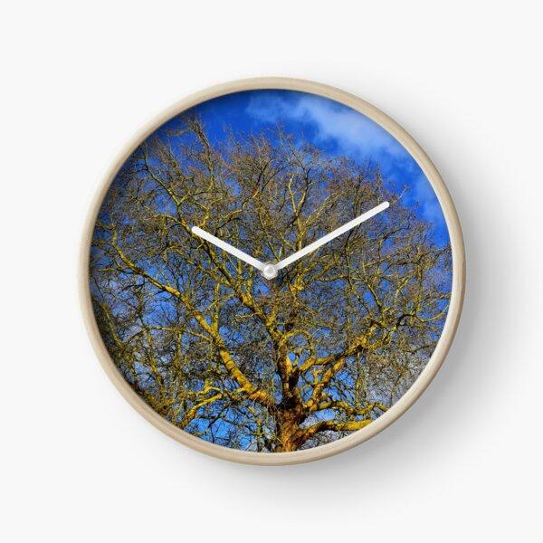 Yellow Old Tree Blue Sky Photo Clock