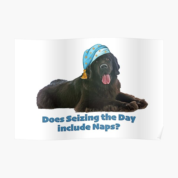 Seize the Day Newfie Poster