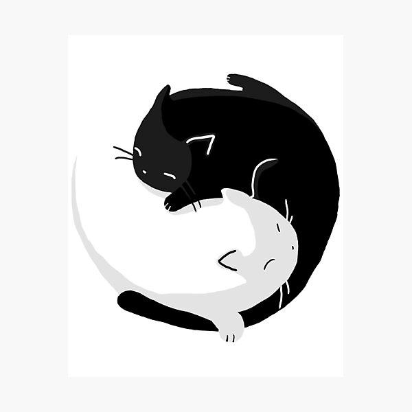 Yin Yang Cats - version 2 Photographic Print