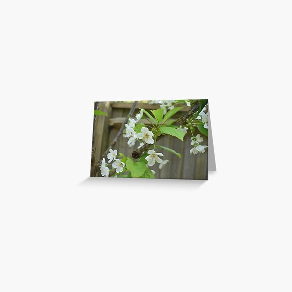 May Flower Blooming Greeting Card