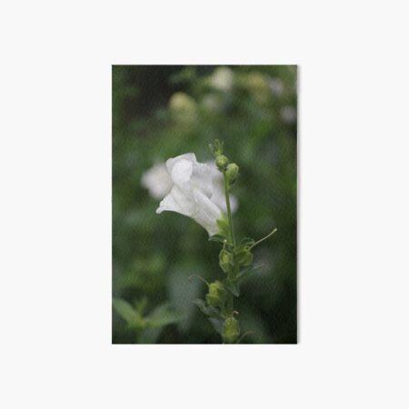 White Snapdragon in Rain Art Board Print