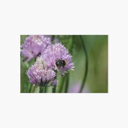 Purple Chive Flower with Bee Art Board Print