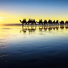 The Cable Beach Camels by Mieke Boynton