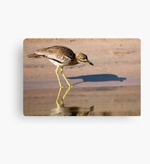 Water Thick-knee Canvas Print