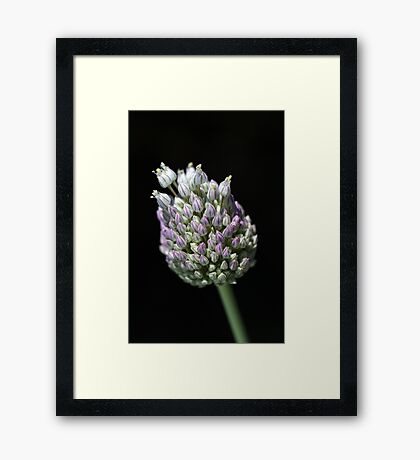 Garlic Bud Framed Print