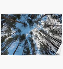 swaying tops of bare trees  Poster