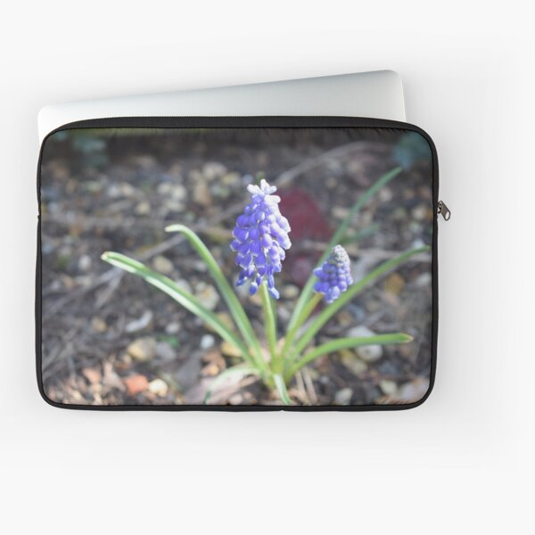 Muscari Flowers Purple Sunlight Laptop Sleeve