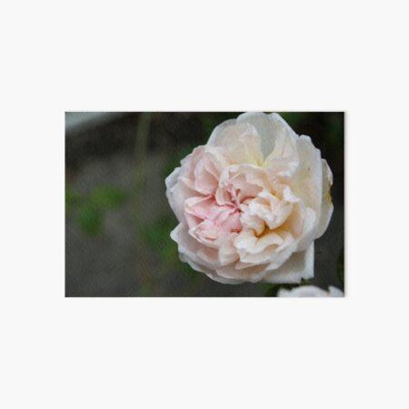 Wild Cottage Rose Art Board Print