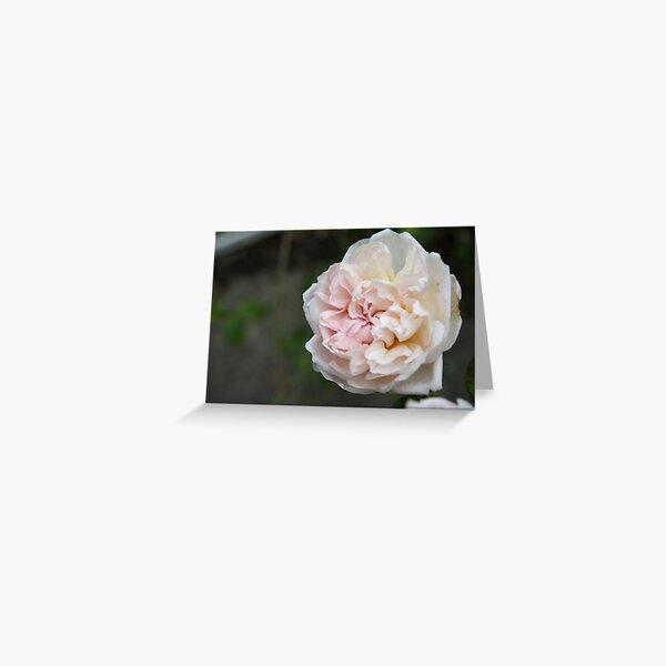 Wild Cottage Rose Greeting Card