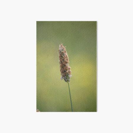 Grass in Bloom Art Board Print