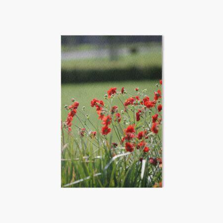 Wildflower Meadow Art Board Print