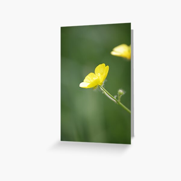 Buttercup in Summer Sun Greeting Card
